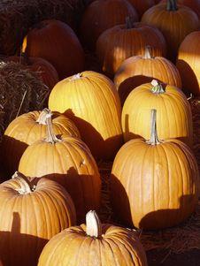 Free Pumpkins Royalty Free Stock Photo - 2986005