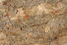 Free Old Tree Bark S Fragment Royalty Free Stock Photos - 2986008