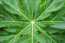 Free Big Green Leaf Stock Photography - 2986222