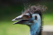 Free Emu Headshot Stock Photo - 2986540