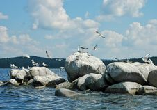 Free Sea Birds Stock Photography - 2987902
