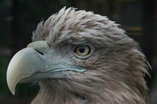 Free The Eagle Stock Photography - 2988482