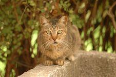 Free Beauriful Cat Royalty Free Stock Photo - 2988515