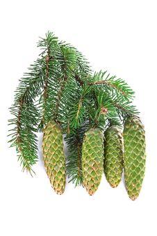 Fur-tree Branch With Cones Royalty Free Stock Photos