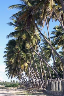 Free Palm Trees On The Beach Royalty Free Stock Photos - 2989828
