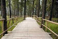 Free Wooden Way Royalty Free Stock Photography - 2989907