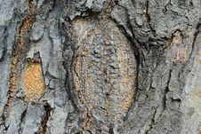 Free Abstract Bark Texture Stock Photos - 29805033