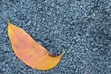 Free Asphalt Texture With Brown Leaf Stock Photography - 29805072