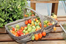 Free Variety Of Tomatoes. Stock Photo - 29806730