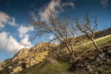 Trees Growing Out Of The Hillside Royalty Free Stock Photos