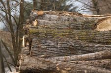 Free Pile Of Logs Royalty Free Stock Images - 29808169