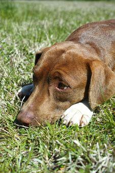 Free Happy Dog Royalty Free Stock Photos - 29818118