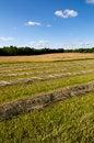 Free Cut Hay In Farm Field Stock Image - 29820241