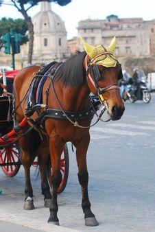Free Horse Stock Image - 29820231