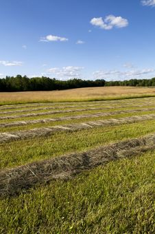 Free Cut Hay In Farm Field Stock Image - 29820241