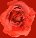 Free Red Rose, Royalty Free Stock Image - 29831876