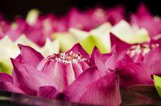Free Lotus Flowers Closeup Stock Images - 29832584