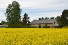 Free Country House And Meadow With Yellow Plants Royalty Free Stock Images - 29834359