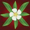 Free Ornament Of Frangipani Flowers & Leaves Stock Photography - 29836642