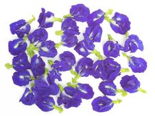 Free Butterfly Pea Royalty Free Stock Image - 29840786