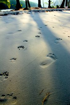 Foot Print Royalty Free Stock Photo