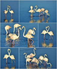 Free Flamingo Collage Royalty Free Stock Images - 29844249