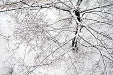 Free Tree Royalty Free Stock Photos - 29844698