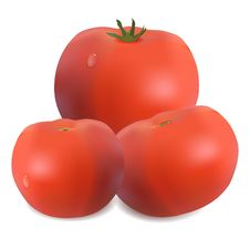 Free Three Tomatoes Royalty Free Stock Photography - 29845467