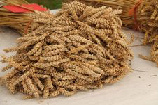 Free Harvested Wheat. Royalty Free Stock Photos - 29845878