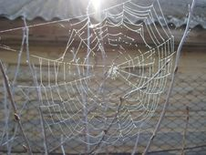 Free Spider S Web With Dew Royalty Free Stock Image - 29847076