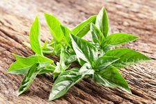 Free Leaves Of Basil Stock Photo - 29855850