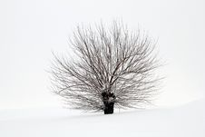 Free Snowy Tree Stock Photography - 29868642