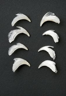 Free Row Of Cat Claws Stock Images - 29881914