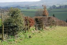 Country Hedge With Fence Royalty Free Stock Photos