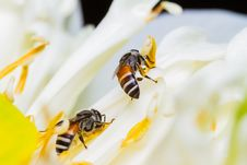 Free Bee On Flower Stock Images - 29884554