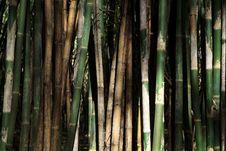 Free Bamboo Trees Stock Photos - 29885353