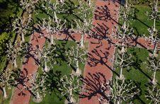 Free Berkeley Tree View B1a Stock Photography - 29885822