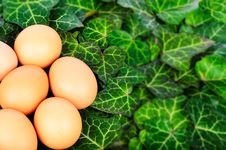 Free Easter Eggs And Ivy Leaves Stock Photos - 29888203
