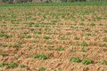 Free Potato Field In Spring. Royalty Free Stock Image - 29892346