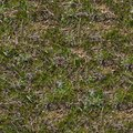 Free Grass Texture. Royalty Free Stock Photos - 29898998