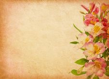 Free Alstroemeria. Royalty Free Stock Images - 29892289