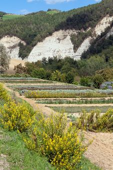 Free Botanical Garden Stock Photography - 29893942