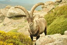 Free Chamois Stock Images - 29894714