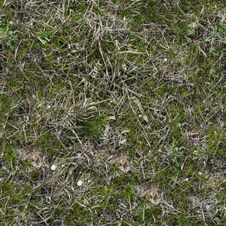 Free Grass Texture. Royalty Free Stock Images - 29898779