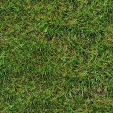Free Green Grass. Seamless Texture. Stock Photos - 29898873