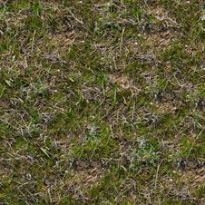 Free Grass Texture. Royalty Free Stock Photos - 29898998