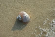 Free Seashell On Shore Stock Photography - 2990312