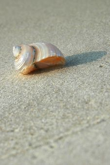 Free Shell On A Shore Royalty Free Stock Image - 2990316