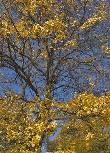 Free Mellow Autumn Stock Photography - 2990622