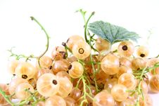 Free Currant Royalty Free Stock Images - 2990859
